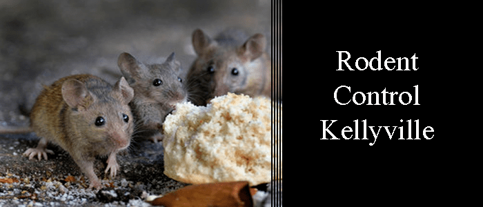Rodent Control Kellyville