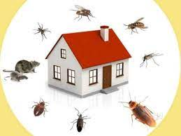 pest control experts in Kellyville